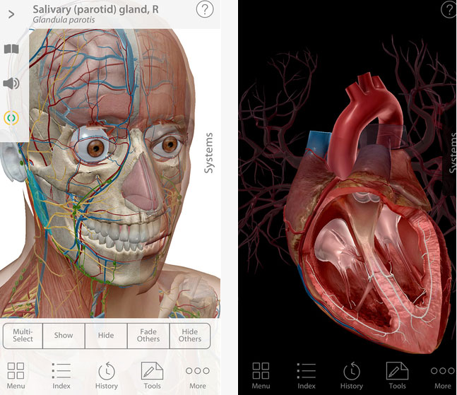Human Anatomy Atlas 2017 For Iphone Ipad Iphone Apps Finder