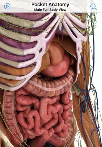 pocket-anatomy